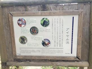 taketomi4.jpg