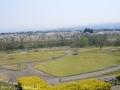 八尾の桜1