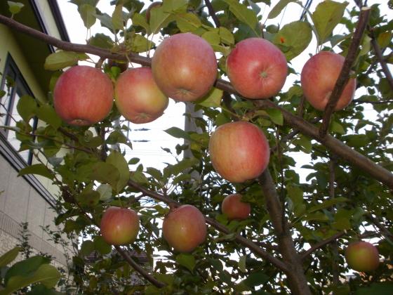 image-2016-apple03.jpg
