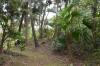 有盛神社森林