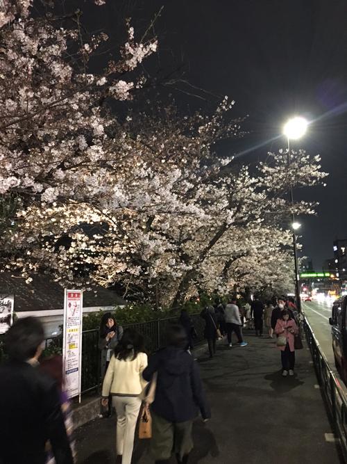 sakuraimage2_2017.jpg
