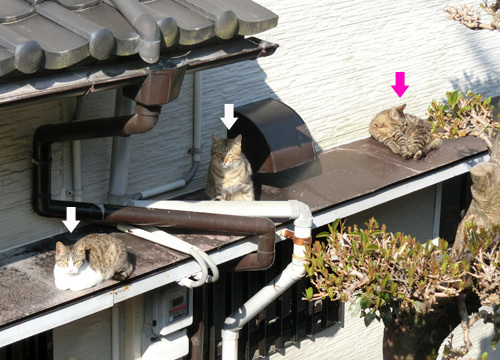 ひさびさ~! ネコ発見っ!! ×3!!!