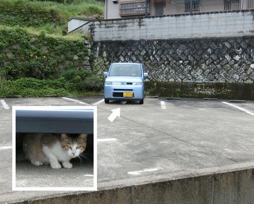 ネコ発見。