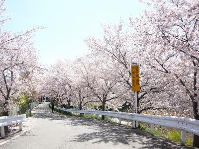 東高校の桜