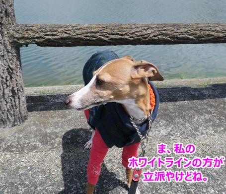 IMG_0571.jpg