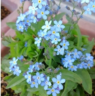 散歩の花 (5)
