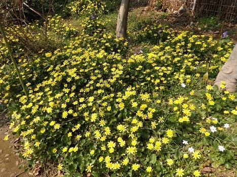 「花と緑の振興センター(2)」