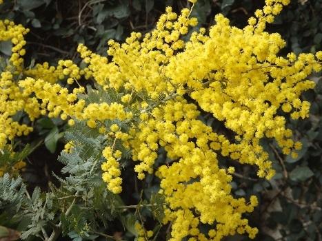 きれぎれの風彩 花と緑の振興センター170319-11