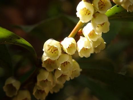 「北本の野草や花木 4月2日(3)」