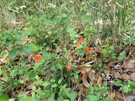 きれぎれの風彩 北本の植物170429-03