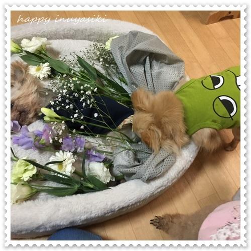 mini16IMG_0373-20170319.jpg