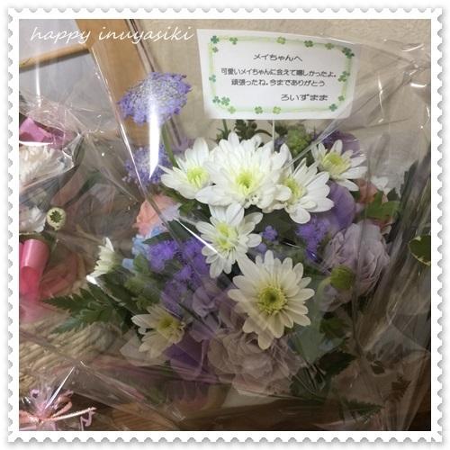 mini16IMG_0568-20170321.jpg