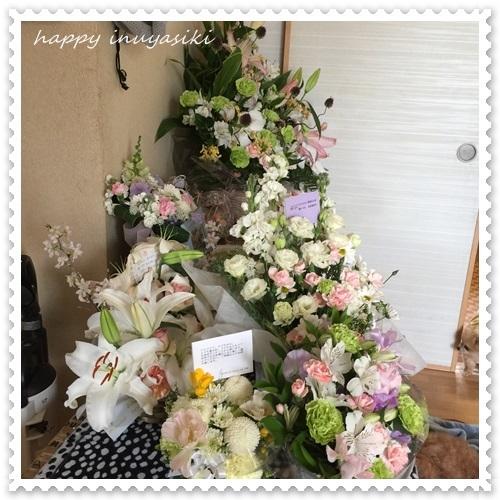 mini16IMG_0589-20170321.jpg