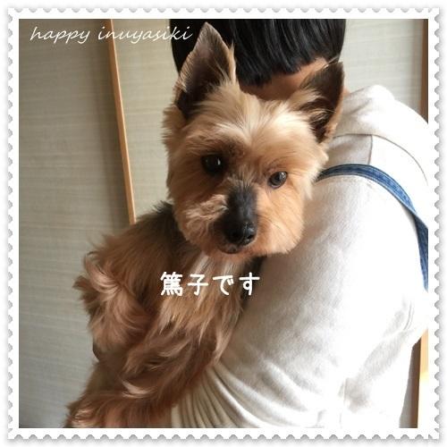 mini16IMG_1112-20170330.jpg