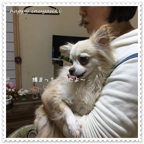 mini16IMG_1153-20170330.jpg