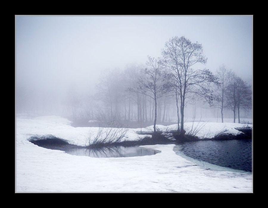 霧のいもり池