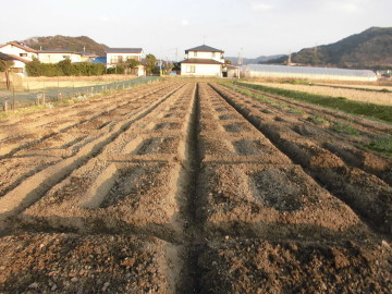 29年体験農園最終準備16