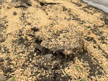 モグラ被害と草取りが3
