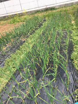 モグラ被害と草取りが10