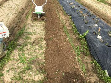 さつま芋苗植えと総会準備6