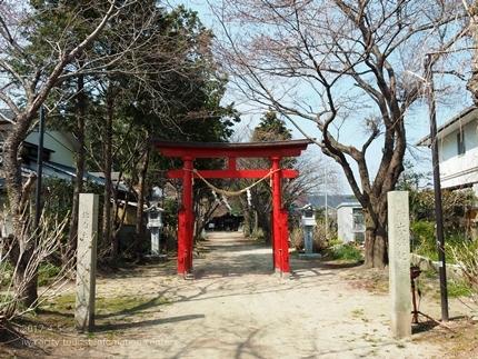 三島八幡神社のシダレザクラ [平成29年4月5日(水)更新]1