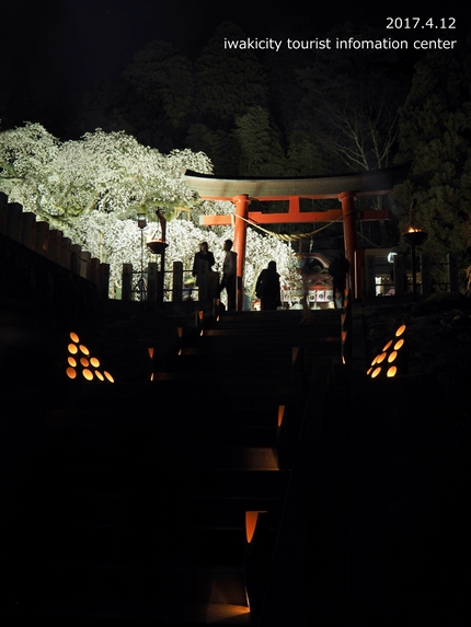 小川諏訪神社のシダレザクラ ライトアップ![平成29年4月12日(水)更新]1