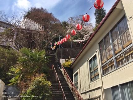 御幸山公園・観音山公園のソメイヨシノ [平成29年4月12日(水)更新]2-1