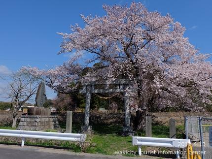 立鉾鹿島神社[平成29年4月13日(木)更新]3