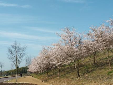 21世紀の森公園の桜 [平成29年4月16日(日)開催]2