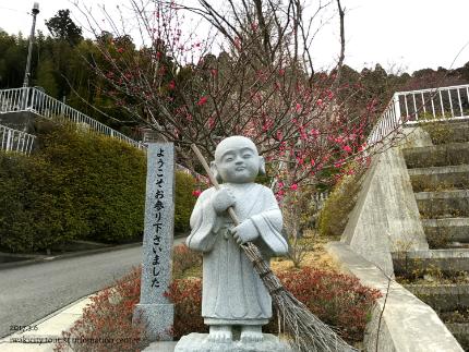 梅林寺のウメ [平成29年3月6日(月)更新]2
