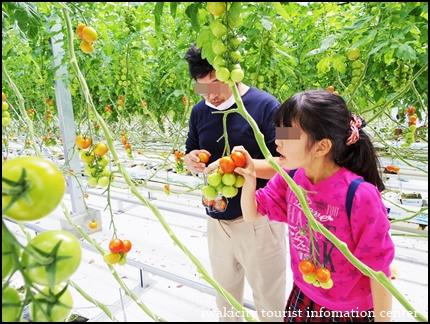 収穫体験5
