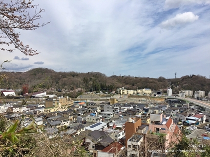 御幸山公園・観音山公園のソメイヨシノ [平成29年4月12日(水)更新]2-3