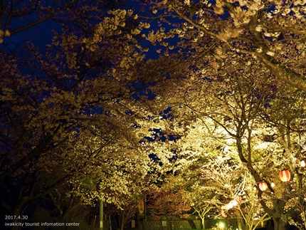 いわきの里鬼ヶ城「桜ライトアップ」レポート [平成29年4月30日(日)更新]4