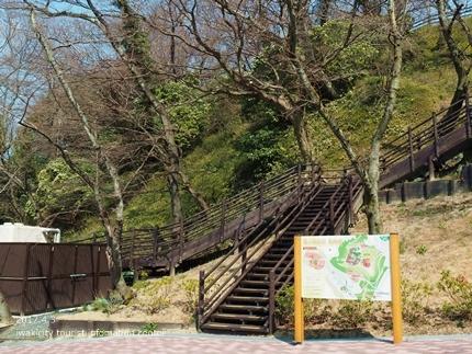 松ヶ岡公園のソメイヨシノ [平成29年4月3日(月)更新]6