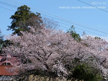 立鉾鹿島神社[平成29年4月13日(木)更新]2