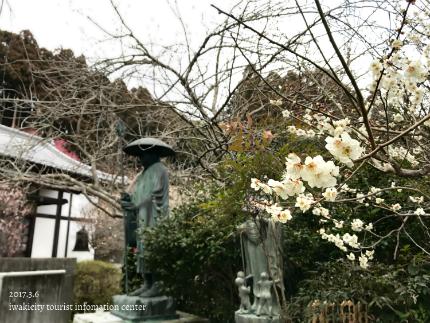 梅林寺のウメ [平成29年3月6日(月)更新]8