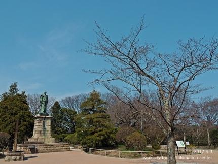 松ヶ岡公園のソメイヨシノ [平成29年4月3日(月)更新]9