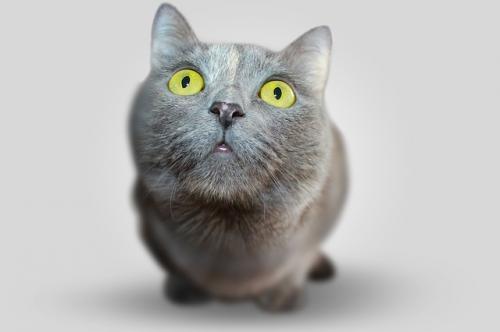 cat-351926_640_convert_20170309094516.jpg