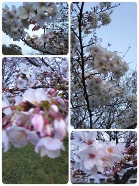 moblog_0bb1daea.jpg