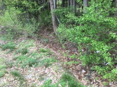 東側の堀跡らしき溝