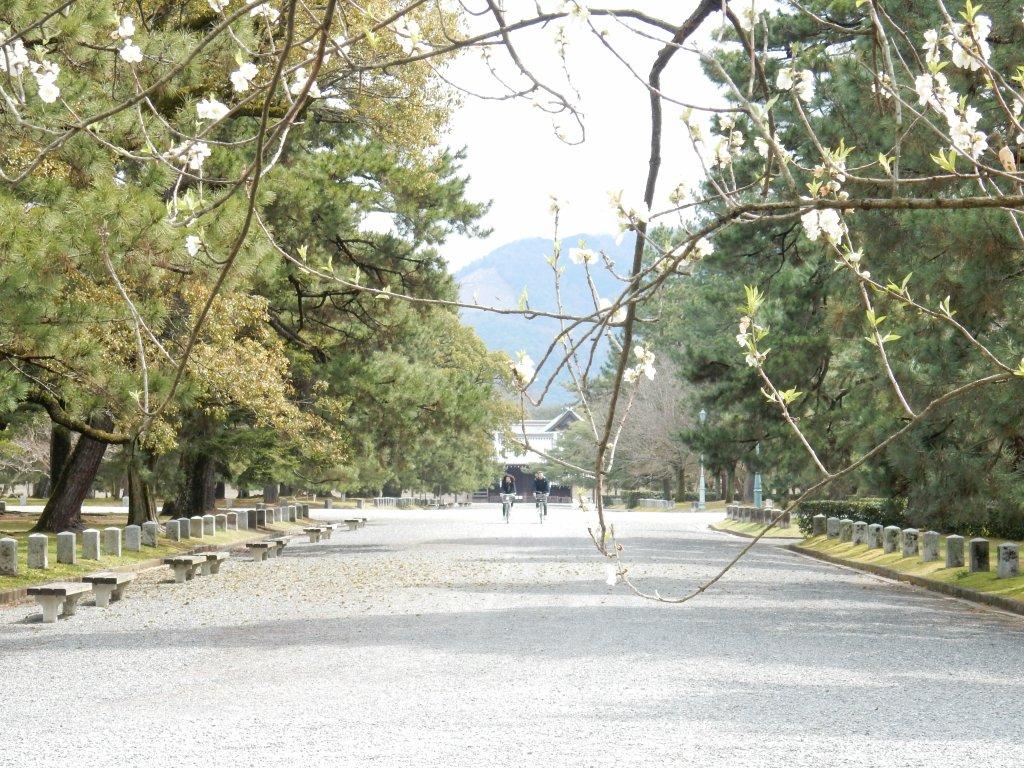 御所桃2017 058
