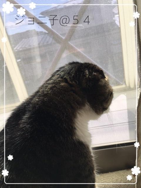 窓際のジョニ子さん2017-5