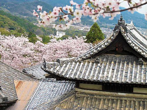 三井寺 (68)
