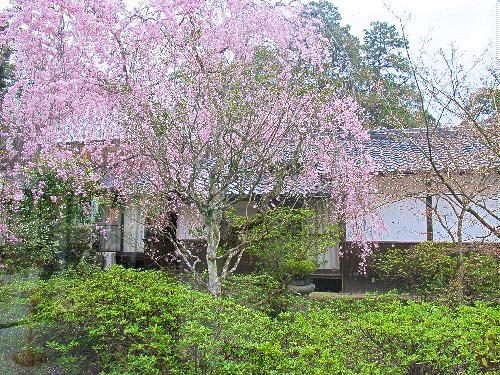 三井寺 (89)