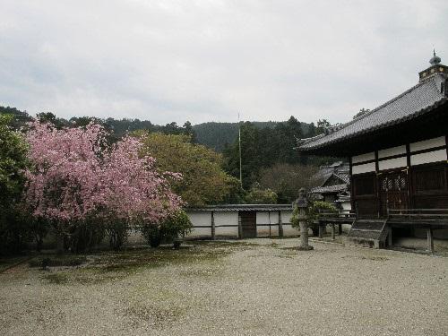 三井寺 (98)