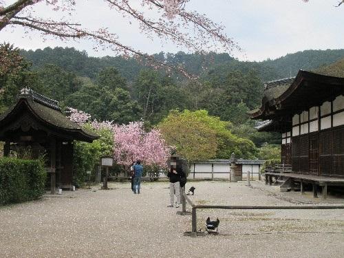 三井寺 (104)