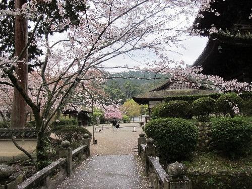三井寺 (106)