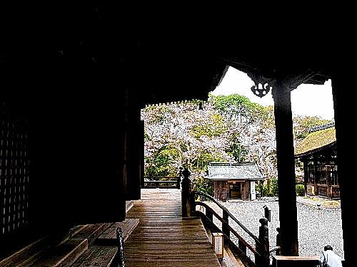 三井寺 (147)