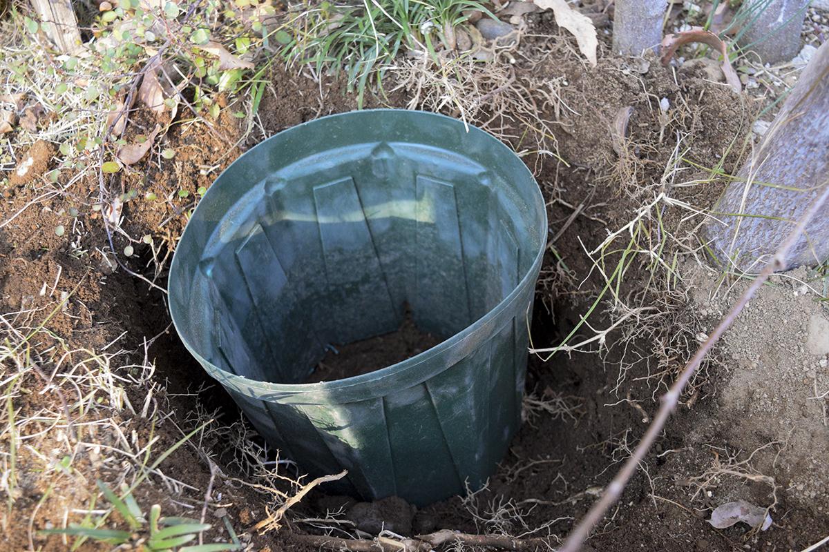 かおりの君を植える場所にいれた穴あき植木鉢