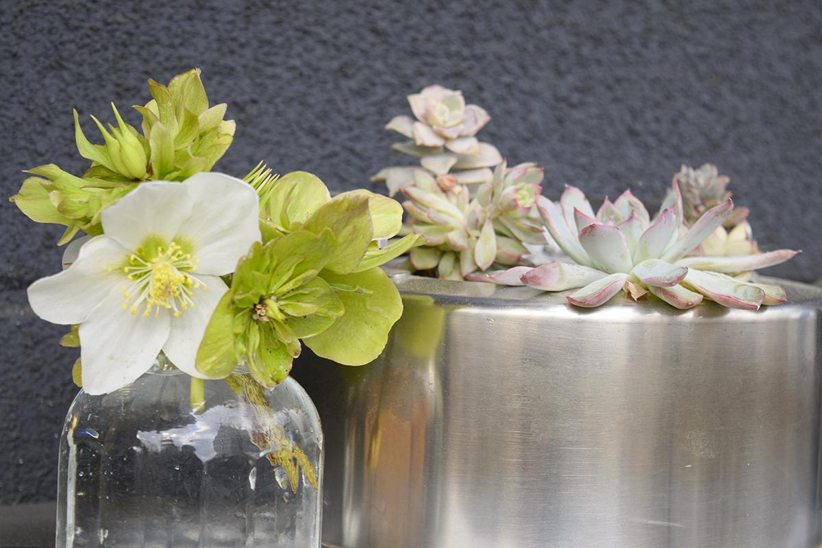 ニゲラ 切り花